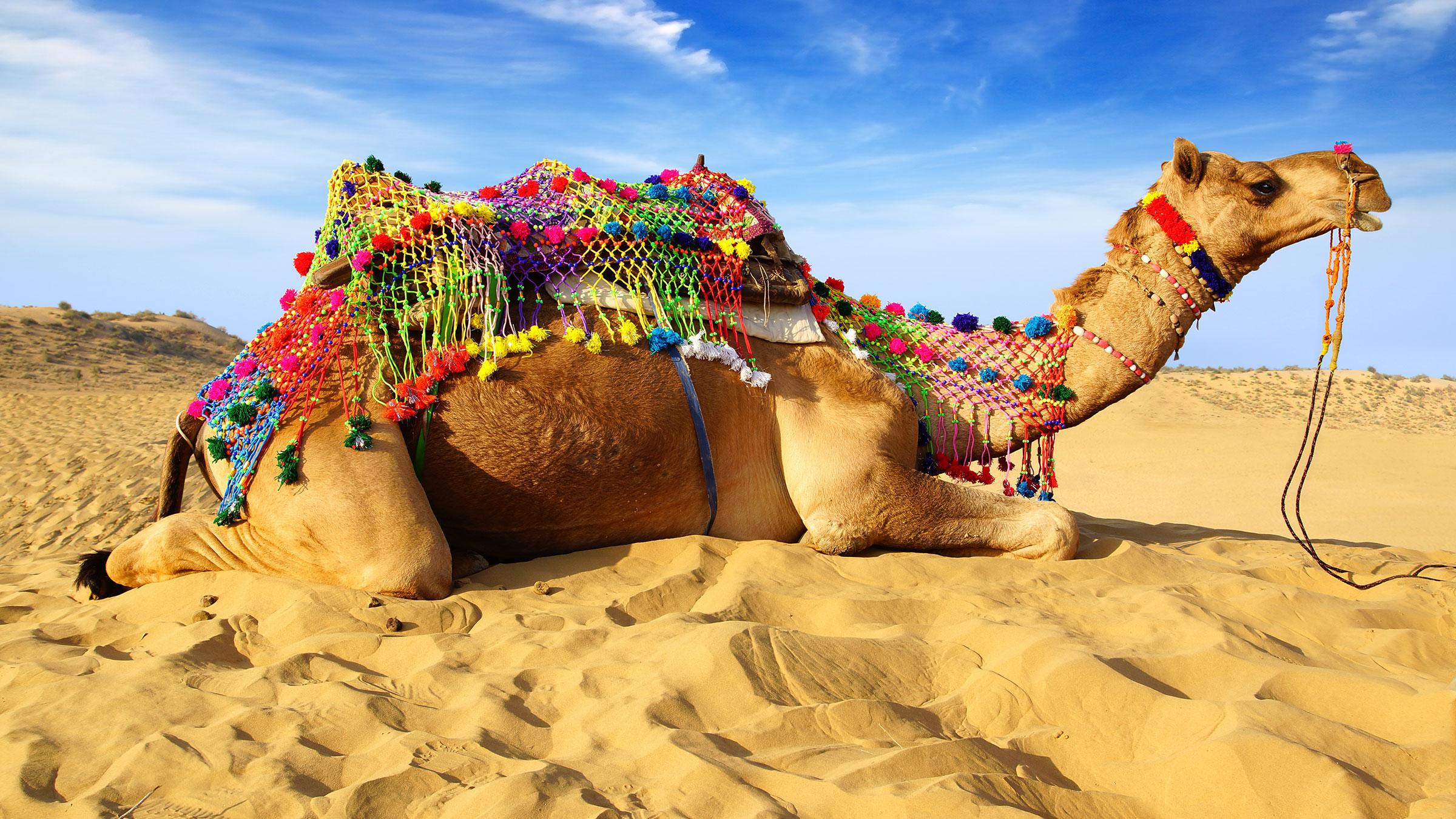 Beauty Of Desert
